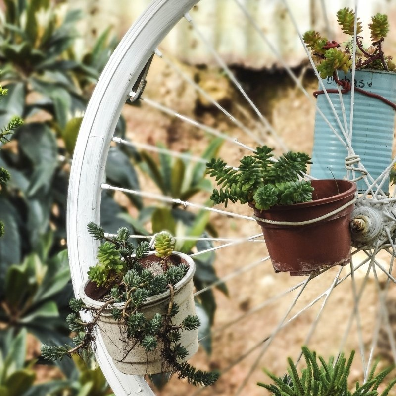 succulents on a bicycle wheel