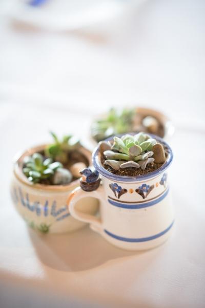 succulent in a mug