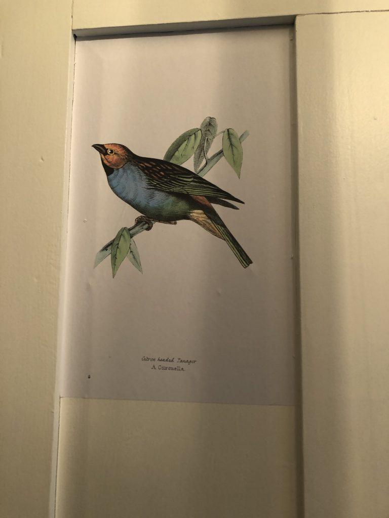 free vintage bird illustrations