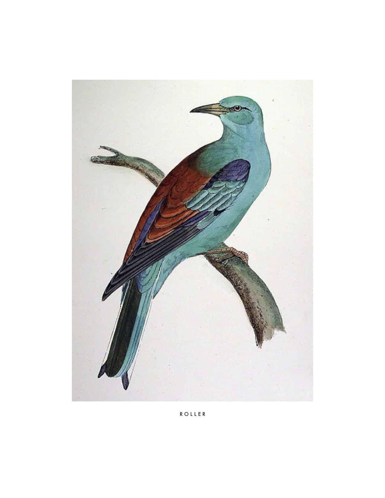 bird on a branch vintage illustration