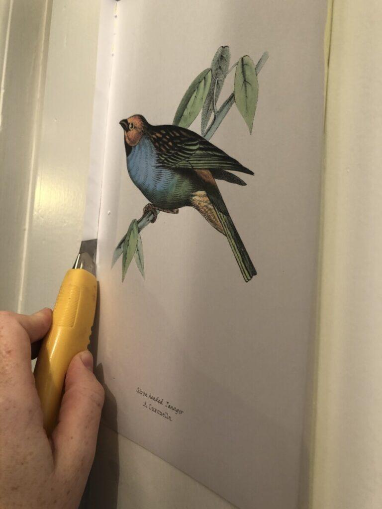 cutting vintage bird illustration to size