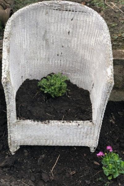 DIY chair planter