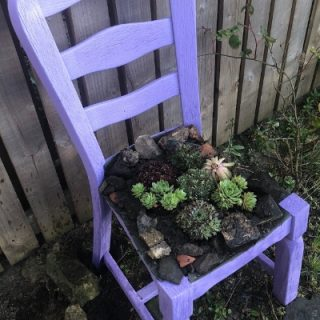 DIY chair planter with succulents
