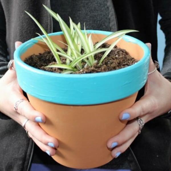 blue rim terracotta pot