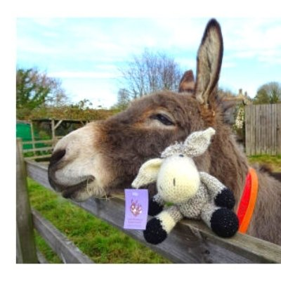 sewing for charity donkey sanctuary