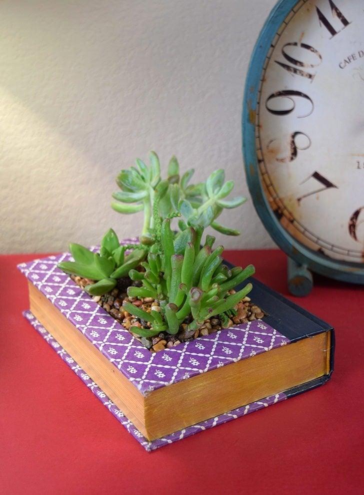 book succulent planter dreamalittlebigger featured