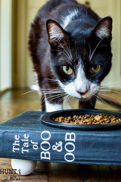 smarty cat food bowl from old book 7
